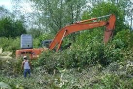 Penebangan hutan bakau