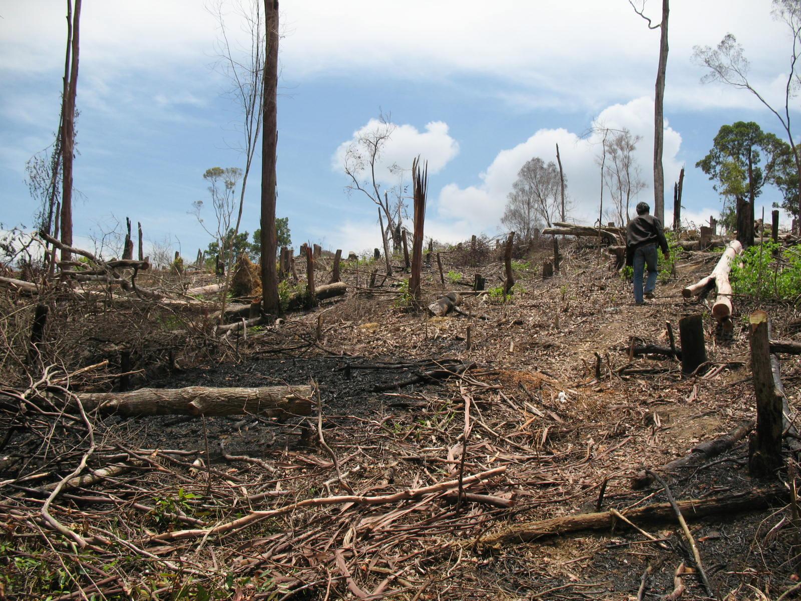 Beberapa Permasalahan Lingkungan Hidup di Indonesia